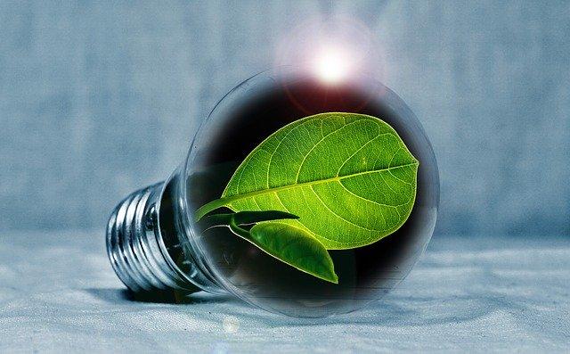 žárovka se zeleným listem uvnitř